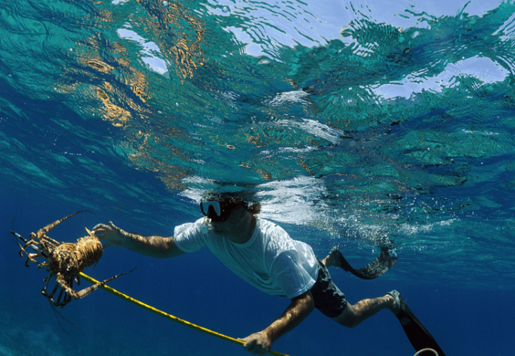 32 (Must-Know) Spearfishing Tips For Beginners to Advanced